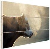 Koe bij zonsopgang Hout 160x120 cm - Foto print op Hout (Wanddecoratie) XXL / Groot formaat!