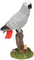 Papegaai vogel grijze roodstaart dieren beeldje 21 cm - Tuin decoratie/woonaccessoires dieren beelden