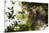 De zon schijnt door de bomen in het Nationaal park Manusela in Indonesië Aluminium 90x60 cm - Foto print op Aluminium (metaal wanddecoratie)