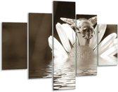 Glas schilderij Bloem | Sepia, Bruin | 100x70cm 5Luik | Foto print op Glas |  F006588
