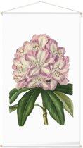 Textielposter Botanisch Rododendron Aquarel (Rhododendron) - 60 x 105 cm