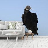 Fotobehang vinyl - Een zwarte gier in de blauwe lucht breedte 470 cm x hoogte 350 cm - Foto print op behang (in 7 formaten beschikbaar)