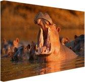 Nijlpaard met open bek Canvas 30x20 cm - klein - Foto print op Canvas schilderij (Wanddecoratie woonkamer / slaapkamer) / Dieren Canvas Schilderijen
