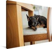 Dwergpinscher ligt op een stoel Canvas 30x20 cm - klein - Foto print op Canvas schilderij (Wanddecoratie woonkamer / slaapkamer) / Huisdieren Canvas Schilderijen