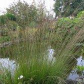 Set 12 stuks Molinia caerulea 'Heidebraut' - Pijpenstrootje