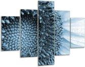 Glas schilderij Bloem | Blauw, Wit | 100x70cm 5Luik | Foto print op Glas |  F006653