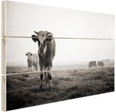 Koeien in de ochtendmist zwart-wit foto Hout 30x20 cm - Foto print op Hout (Wanddecoratie)