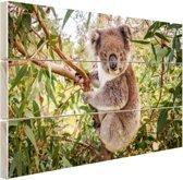 Koala in een boom Hout 120x80 cm - Foto print op Hout (Wanddecoratie)