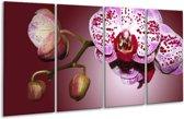 Glasschilderij Orchidee   Paars, Wit   160x80cm 4Luik   Foto print op Glas    F002624