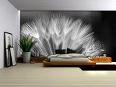 Fotobehang Papier Bloemen | Zwart, Wit | 368x254cm