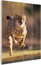 Jagende luipaard foto Hout 120x160 cm - Foto print op Hout (Wanddecoratie) XXL / Groot formaat!