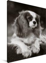 Zwart wit foto van een Cavalier King Charles-spaniël Canvas 30x40 cm - klein - Foto print op Canvas schilderij (Wanddecoratie woonkamer / slaapkamer) / Huisdieren Canvas Schilderijen