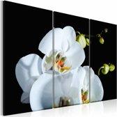Canvas Schilderij - Orchidee in 3 delen , zwart wit , 2 maten