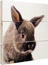 Portret van een Konijn Hout 20x20 cm - klein - Foto print op Hout (Wanddecoratie)
