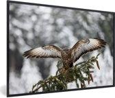 Foto in lijst - Volwassen buizerd in de besneeuwde landen van Tsjechië fotolijst zwart 60x40 cm - Poster in lijst (Wanddecoratie woonkamer / slaapkamer)