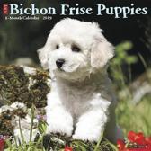 Bichon Frise Puppies 2019 Kalender