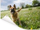 Duitse Herder tussen de bloemetjes Tuinposter 80x60 cm - Tuindoek / Buitencanvas / Schilderijen voor buiten (tuin decoratie)