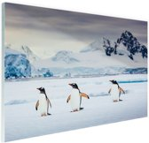 FotoCadeau.nl - Drie pinguins fotoafdruk Glas 90x60 cm - Foto print op Glas (Plexiglas wanddecoratie)