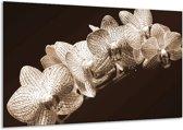 Glasschilderij Orchidee | Sepia, Bruin | 120x70cm 1Luik | Foto print op Glas |  F001876