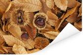 Bruine kleuren van de tamme kastanjes en bladeren op de grond Poster 90x60 cm - Foto print op Poster (wanddecoratie woonkamer / slaapkamer)