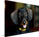 Schattige zwarte Teckel Canvas 90x60 cm - Foto print op Canvas schilderij (Wanddecoratie woonkamer / slaapkamer) / Huisdieren Canvas Schilderijen