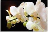 Schilderij - Orchidee in het wit