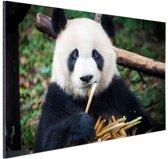 Panda die bamboe eet Aluminium 120x80 cm - Foto print op Aluminium (metaal wanddecoratie)