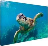 Zeeschildpad zwemmend in Hawai Canvas 30x20 cm - Foto print op Canvas schilderij (Wanddecoratie)