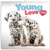 Young Love - Kittens & Puppies Kalender 2019