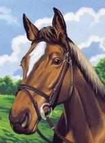 Schilderen op nummer - horses head