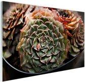 Succulente plant close-up Glas 60x40 cm - Foto print op Glas (Plexiglas wanddecoratie)