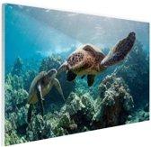 Twee zeeschildpadden Glas 90x60 cm - Foto print op Glas (Plexiglas wanddecoratie)