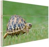 Schildpad op gras Hout 80x60 cm - Foto print op Hout (Wanddecoratie)