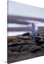 Sneeuwuil landt op het strand Canvas 90x140 cm - Foto print op Canvas schilderij (Wanddecoratie woonkamer / slaapkamer)