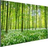 Groene bomen in het bos Aluminium 180x120 cm - Foto print op Aluminium (metaal wanddecoratie) XXL / Groot formaat!