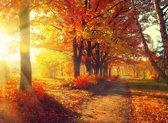 Papermoon Autumn Forest Vlies Fotobehang 200x149cm 4-Banen