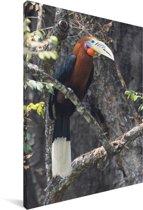 Rosse neushoornvogel zit in een boom Canvas 90x140 cm - Foto print op Canvas schilderij (Wanddecoratie woonkamer / slaapkamer)