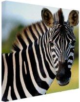 Zebra in Afrika Canvas 20x20 cm - klein - Foto print op Canvas schilderij (Wanddecoratie woonkamer / slaapkamer) / Dieren Canvas Schilderijen