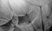Fotobehang Bloemen | Grijs | 152,5x104cm
