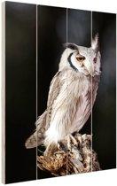 Dwergooruil Hout 60x80 cm - Foto print op Hout (Wanddecoratie)