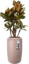 Elho Pure Beads Large 40 - Plantenbak - Pebble Pink - Binnen & Buiten  - L 39.2 x W 39.2 x H 66.5 cm