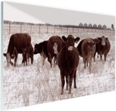 Kudde koeien in een sneeuwveld Glas 90x60 cm - Foto print op Glas (Plexiglas wanddecoratie)