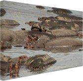 Kudde nijlpaard op een vijver Canvas 30x20 cm - klein - Foto print op Canvas schilderij (Wanddecoratie woonkamer / slaapkamer) / Dieren Canvas Schilderijen