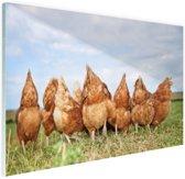 Kippen in het veld Glas 90x60 cm - Foto print op Glas (Plexiglas wanddecoratie)
