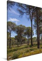 Pijnbomen in het Nationaal park Doñana in Spanje Canvas 40x60 cm - Foto print op Canvas schilderij (Wanddecoratie woonkamer / slaapkamer)