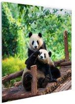 Spelende pandas Glas 50x50 cm - Foto print op Glas (Plexiglas wanddecoratie)