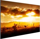 Kangoeroe bij zonsondergang Aluminium 60x40 cm - Foto print op Aluminium (metaal wanddecoratie)