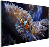 Mooie clownvis Glas 30x20 cm - klein - Foto print op Glas (Plexiglas wanddecoratie)
