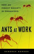 Ants At Work