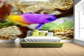 Paars-gele vis onder water Fotobehang 380x265